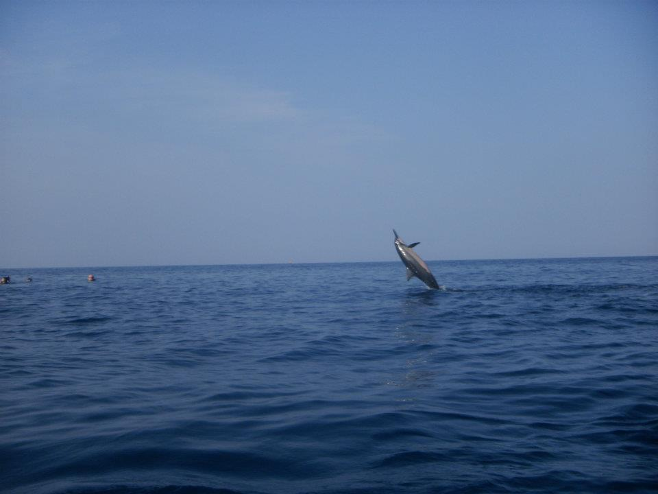 Spinner Dolphin photo by Mike Kunze