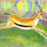 Running Gazelle